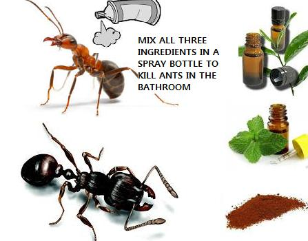 Amazing HOW TO GET RID OF ANTS IN THE BATHROOM