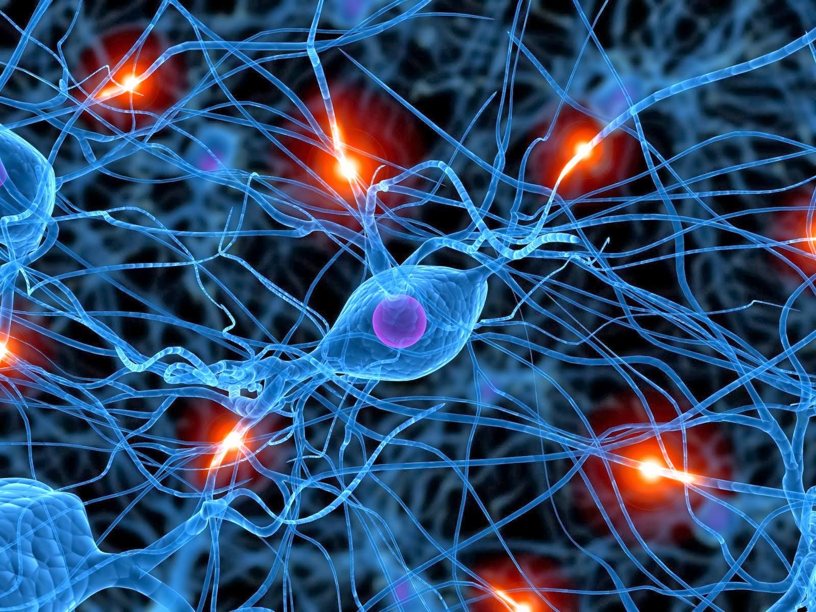 brain neuron wallpaper download - photo #16