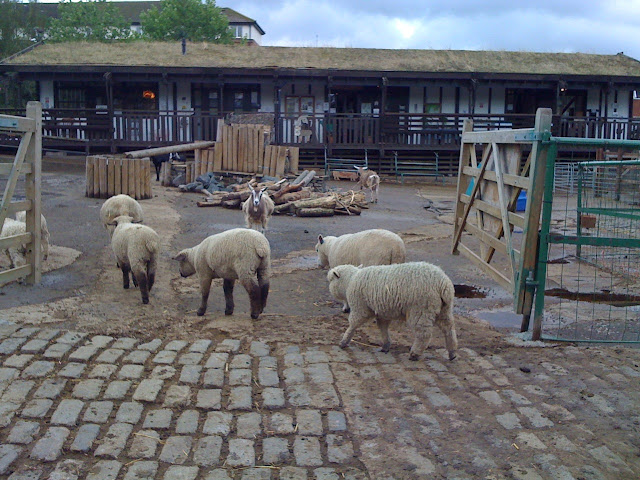 What+to+do+in+London+Surrey+Docks+City+Farm+sheep