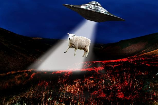 Panic after ufo abducts sheep a sheep was reportedly abducted by a ufo
