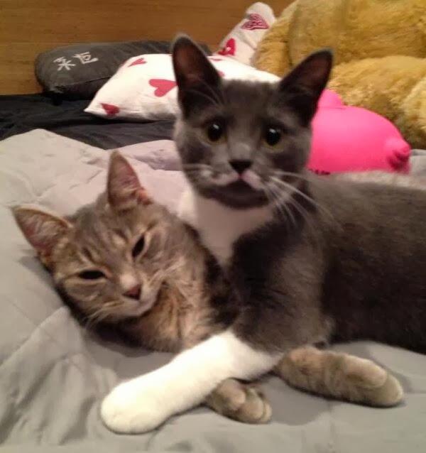 Funny cats - part 78 (35 pics + 10 gifs), cat pics, cats cuddling