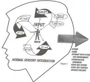 Gelombang Gamma, Ritme Motor Sensorik dan Schuman Resonancy pada otak