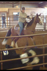 Summer the cow horse 2011