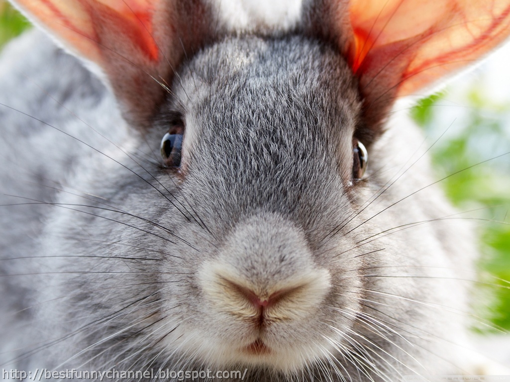 Cute and funny pictures of animals 46, Bunny 5.