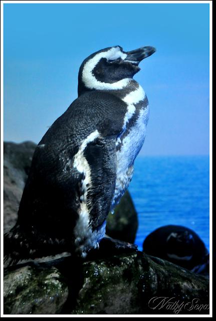 Diário fotográfico #11 - Pinguim Aquário de Ubatuba