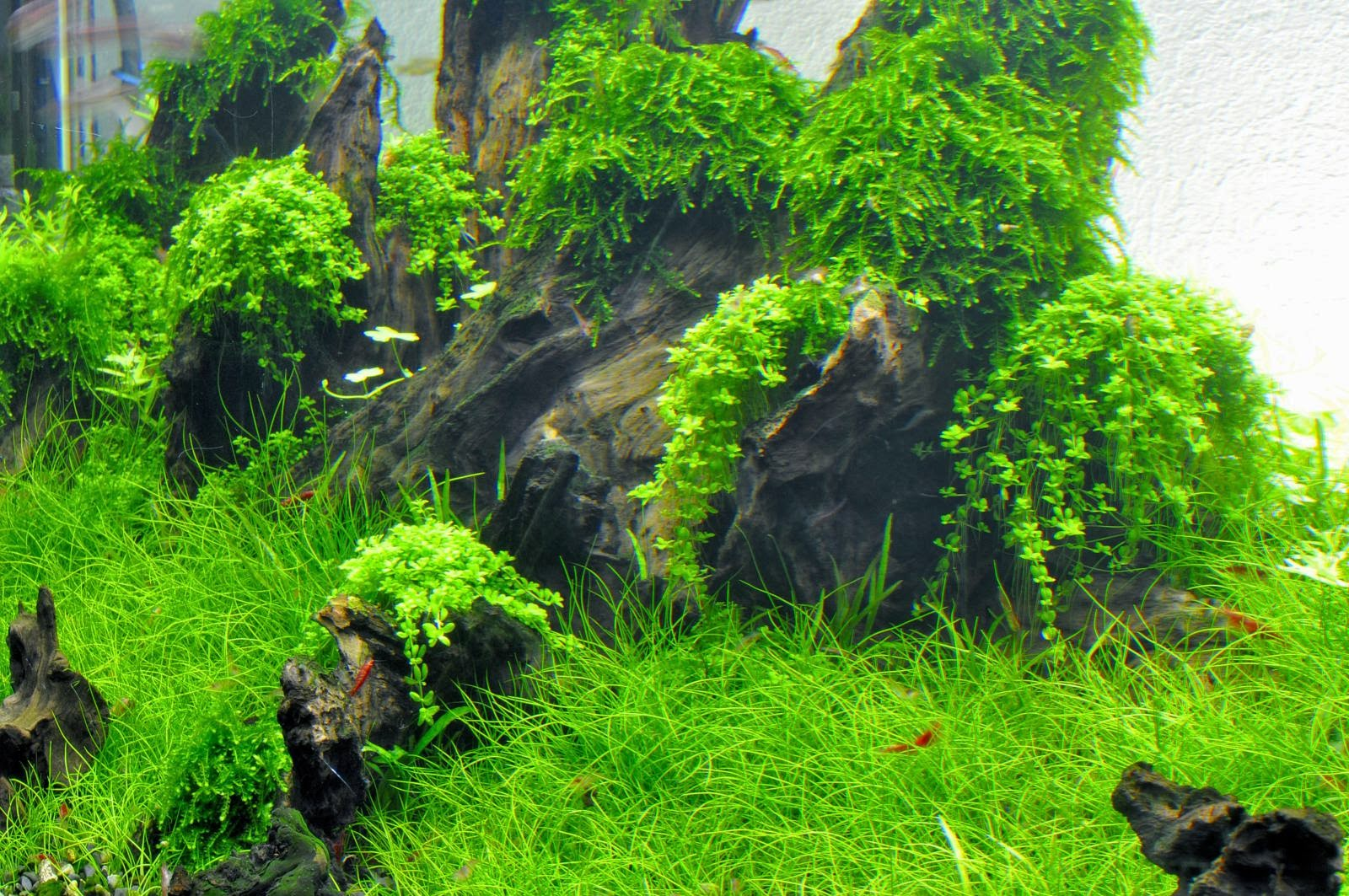 Aquascaping spain crestatx by pep pericas - Aquascape espana ...