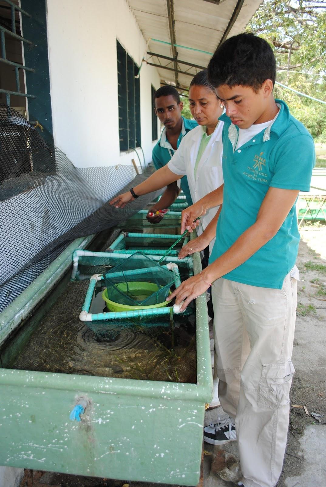 Centro acu cola y agroindustrial de gaira regional for Peces para criadero