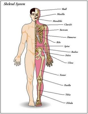 Mystery Warriors Interesting Facts About Human Body