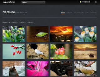 WordPress-Template Neptune