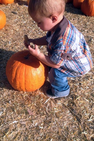 Reef enjoys the Bates Nut Farm Pumpkin Patch.