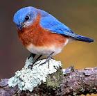 Belos Pássaros em Jpg