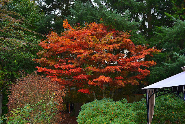 fall color, fall leaves, autumn garden