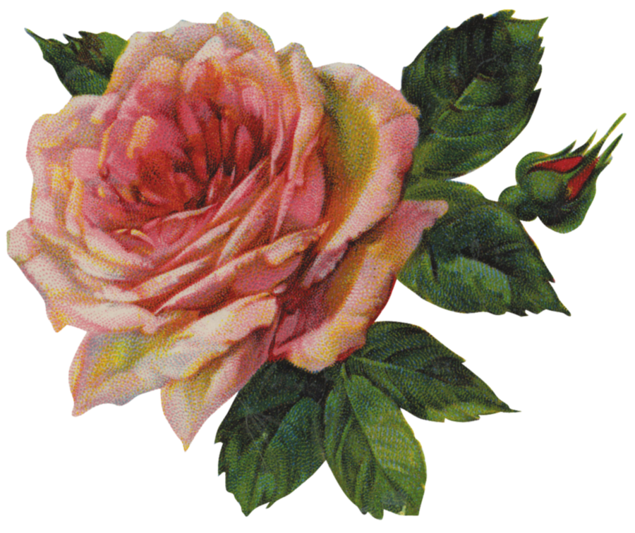 vintage rose illustration  courtesy of the Vintage WorkshopVintage Rose Clip Art
