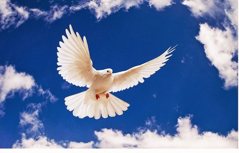 Somediffrent: Beautiful White Birds Photo