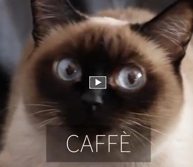 Video Incredibili Animali Compilation Di Gatti Molto Divertenti