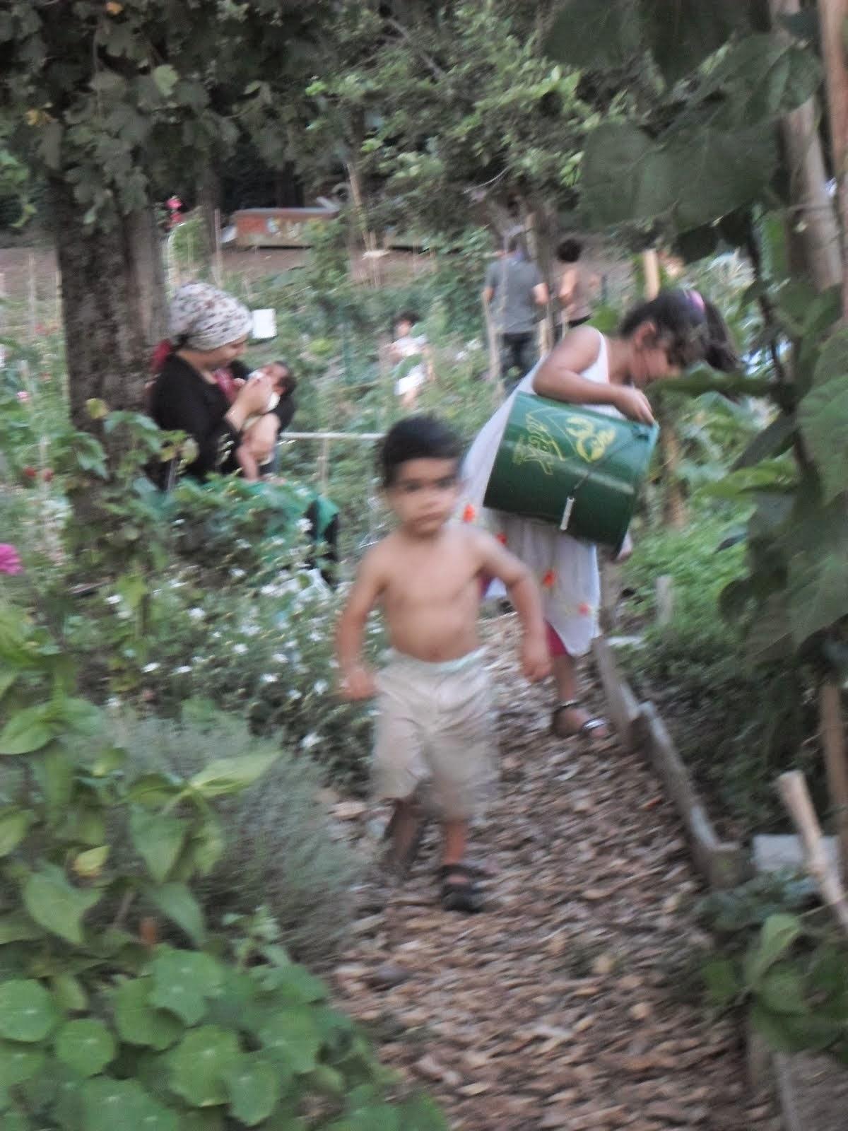 Le jardin rajeunit...