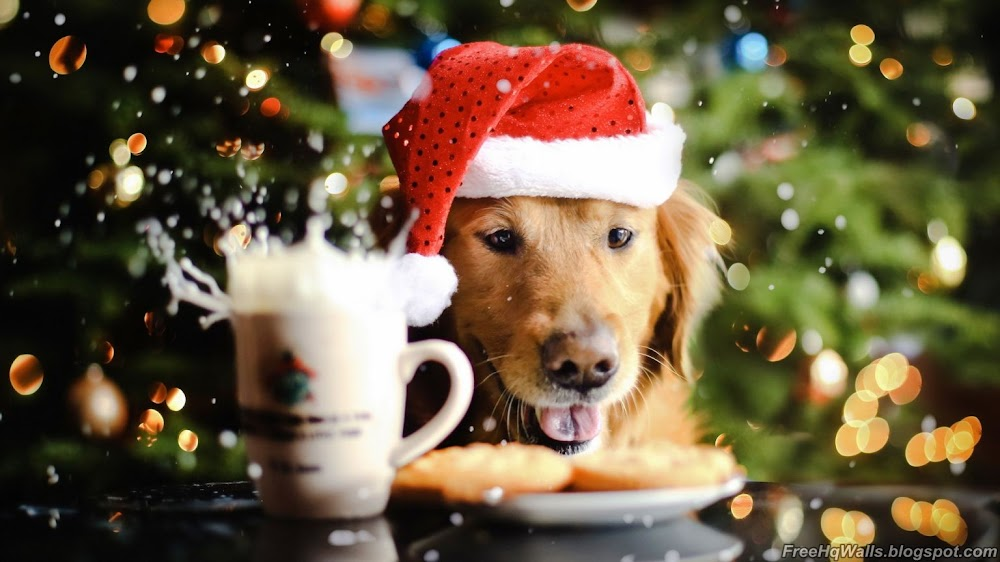 Beautiful Christmas Dog Wallpaper | Free HD Wallpapers high resolution widescreen
