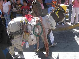 Funny Donkey Dressed Up