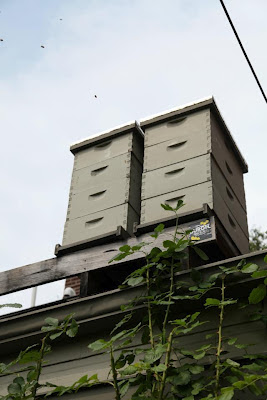 Beehive in urban Pittsburgh