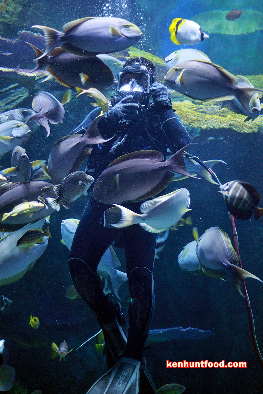 Ken Hunts Food Suggested Itinerary Bangkok Thailand Travel And Et Ticket Sea Life Ocean World Aquarium Only Child Partake In A Fun Filled Family Activities At One Of The Largest Aquariums South East Asia Housed Within Iconic Siam