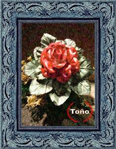 Rosa de San Jordi