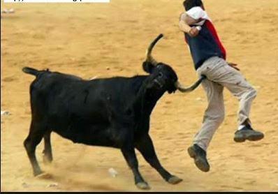 Toro CELOSO mato' al hombre que ordeñaba la vaca