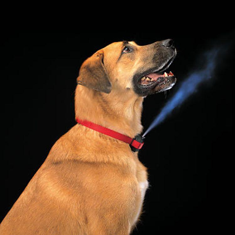 Dog Quit Barking