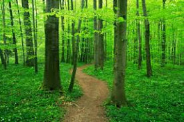 The poetry path beckons . . .