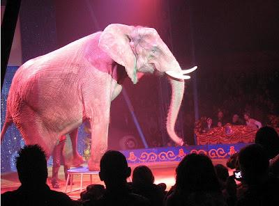 olifant douanita in rotterdam