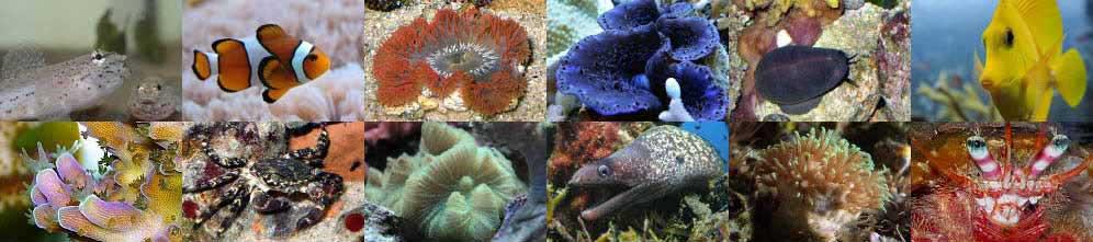 Acquario Marino: dal Mediterraneo al Tropicale
