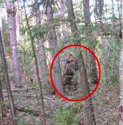 Gambar Hewan Misterius di Hutan