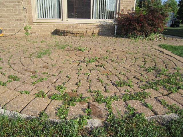 Neglected For Over 12 Years, These Pavers Are Restored By Repairs,  Cleaning, U0026 Sealing