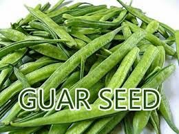 Agri Commodity Tips ,  Commodity free tips  , Commodity intraday tips