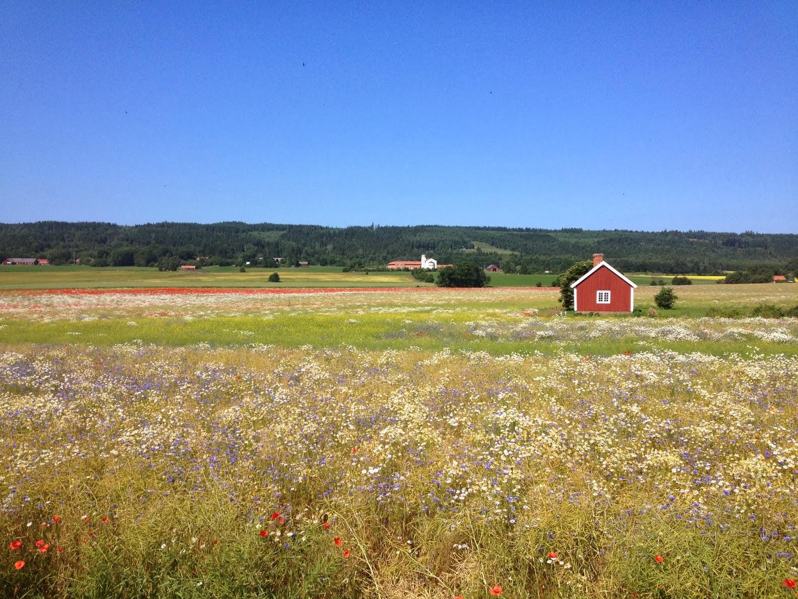 Renoveringsblogg: augusti 2013