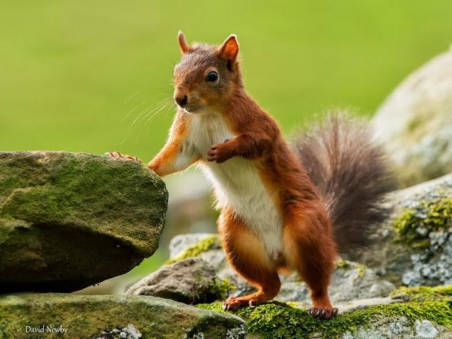 "<img src=""http://1.bp.blogspot.com/-GTHA2MN2ziw/UrC15RQok_I/AAAAAAAAF5Q/YjiUyE6wIYg/s1600/777.jpeg"" alt=""Squirrels Animal wallpapers"" />"