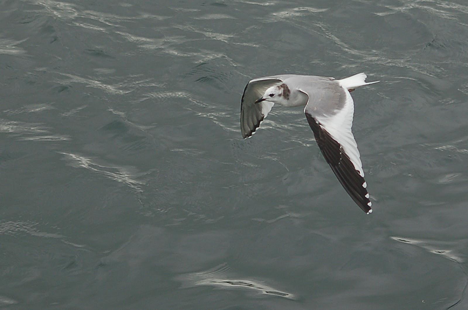 well be the target weekend watch this space sabines gull sabines gullSabines Gull