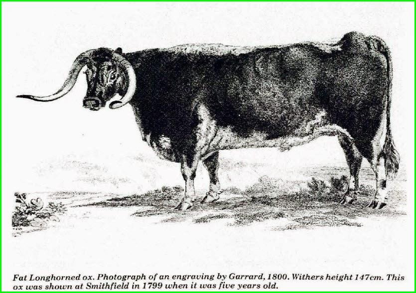 6 kg Equilibrium-Simply Irresistible cheval Crunch vertueux légumes X TAILLE
