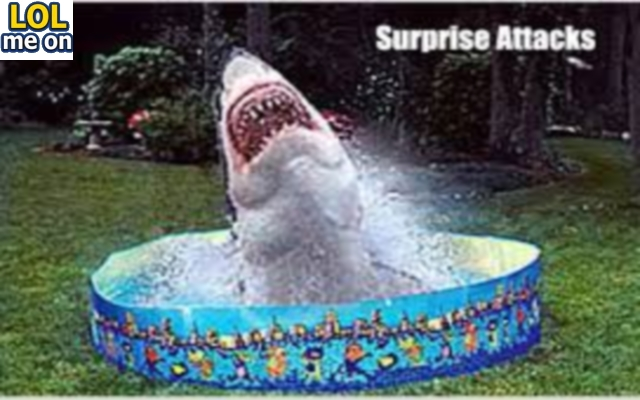 Surprise Attacks - Funny Picture With Caption Funny pictures