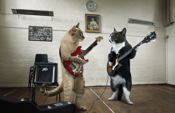 Kucing jamming gitar