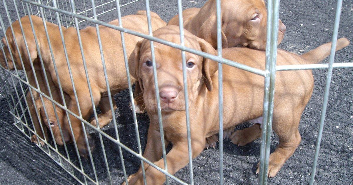 Detener la venta de animales en Internet