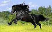Caballos Negro Corriendo Imágenes de Animales HD caballos negro corriendo imagenes de animales hd