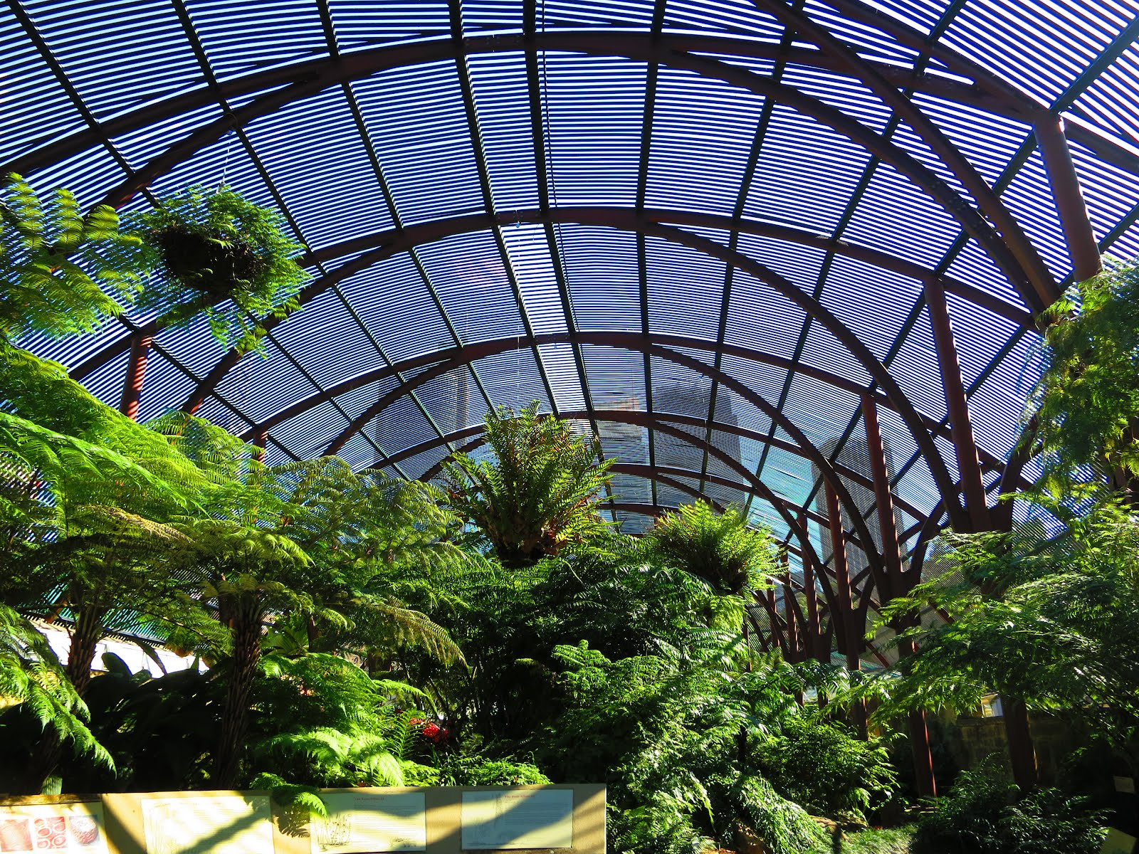 The Fernery Royal Botanic Gardens