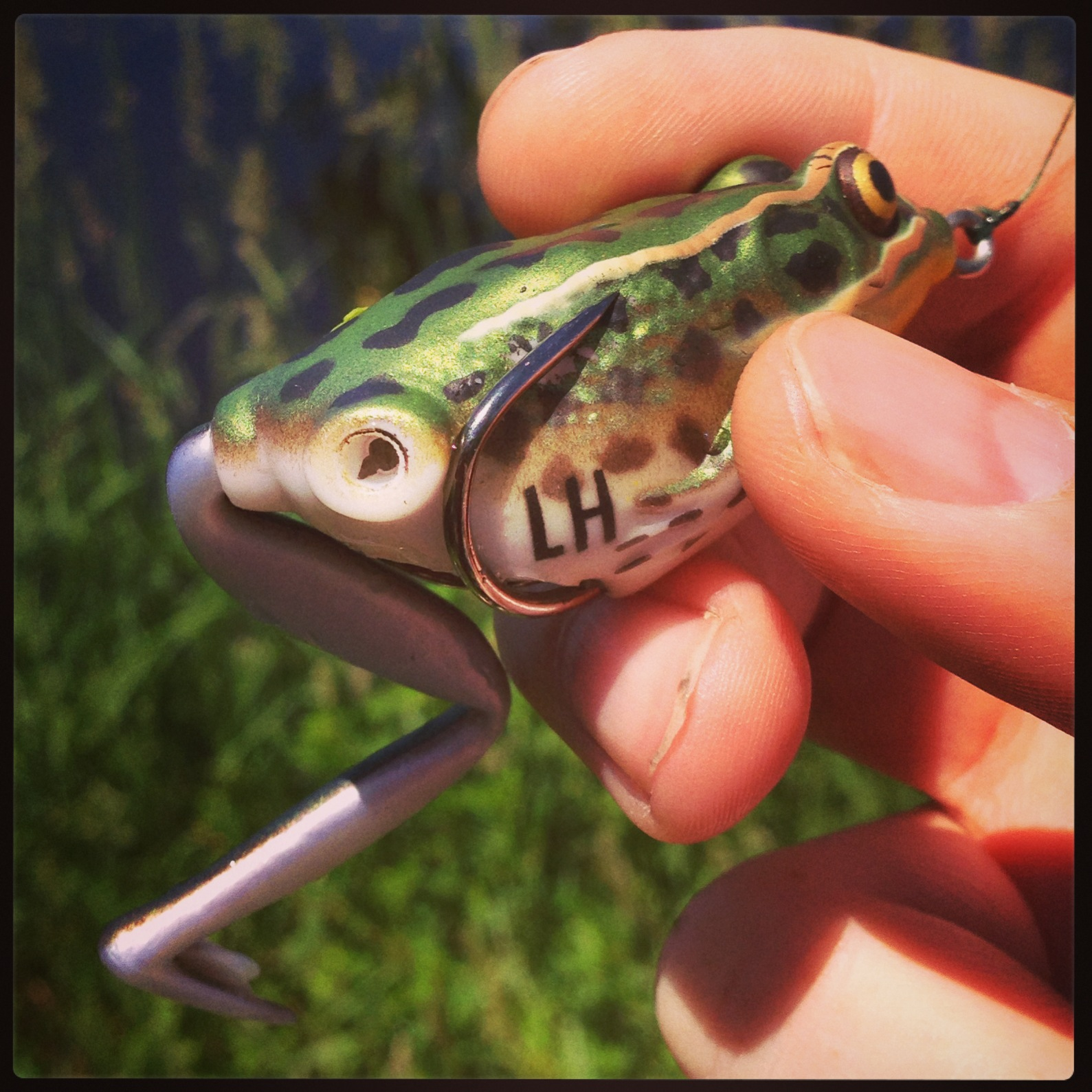 Bass junkies frog pond lunker hunt lunker frog review for Frogs for fishing