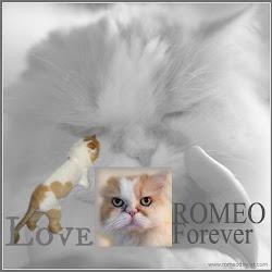 RIP ROMEO
