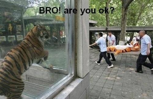 animal with captions, caption animals, lol animals, lolcats, funny animal caption pictures, funny animal pictures