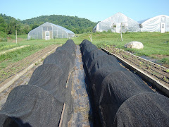 Shade Cloth Covered Crops