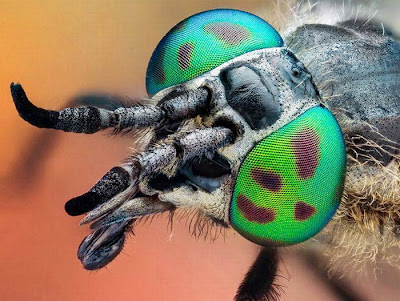 Nature Wallpaper insects hot look