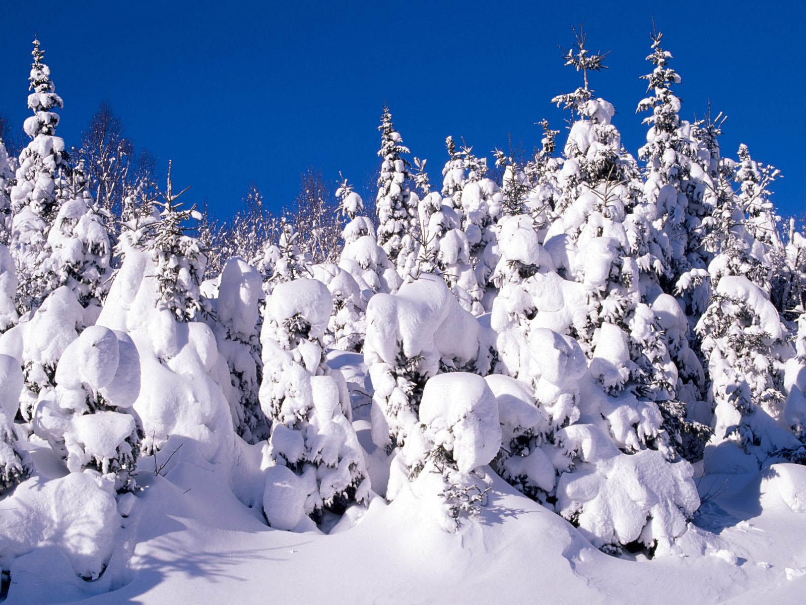 winter backgrounds desktop wallpaper