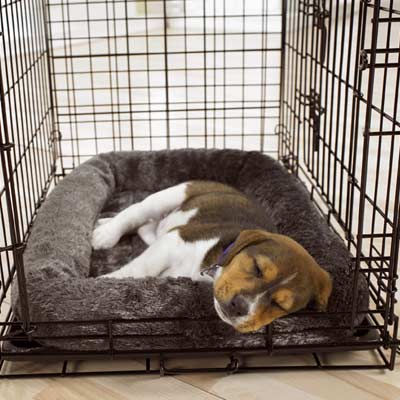 Effective methods for potty training dogs