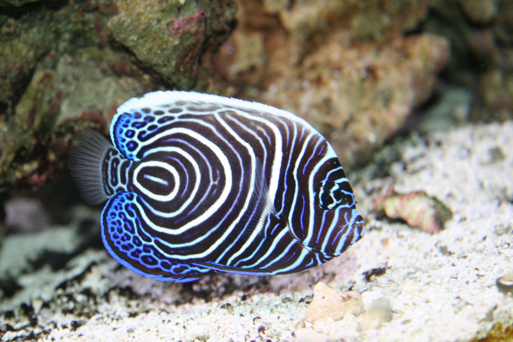 Top 10 most beautiful and colorful fish top rated for Oily fish representative species